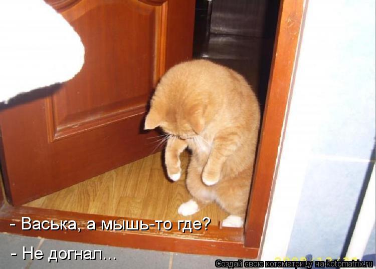 Котоматрица: - Васька, а мышь-то где? - Не догнал...