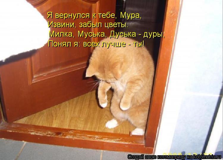 Котоматрица: Я вернулся к тебе, Мура, Извини, забыл цветы. Милка, Муська, Дуська - дуры, Понял я: всех лучше - ты!