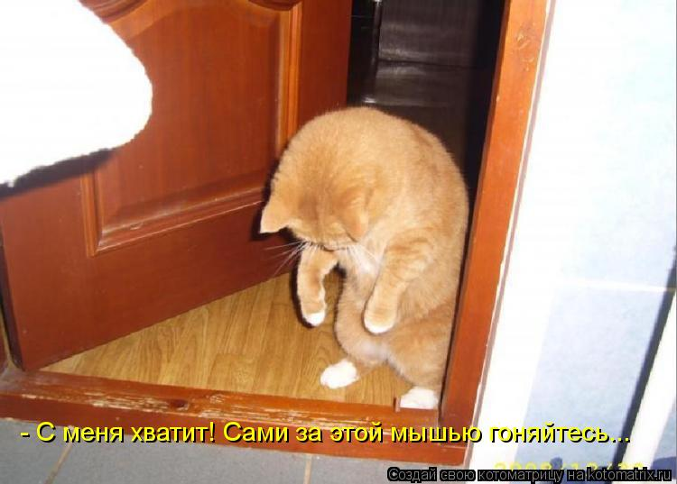 Котоматрица: - С меня хватит! Сами за этой мышью гоняйтесь...