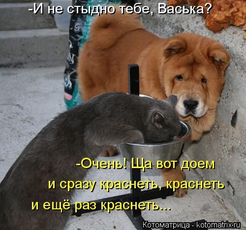 Котоматрица: -И не стыдно тебе, Васька? и сразу краснеть, краснеть и ещё раз краснеть... -Очень! Ща вот доем