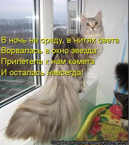 Котоматрица: В ночь на среду, в нитях света Ворвалась в окно звезда: Прилетела к нам комета И осталась навсегда!