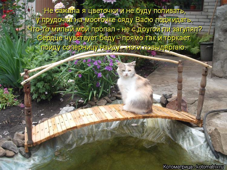 Котоматрица: Не сажала я цветочки и не буду поливать, у прудочка на мосточке сяду Васю поджидать. Что-то милый мой пропал - не с другой ли загулял? Сердце ч