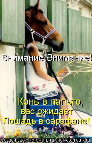 Котоматрица: Внимание!Внимание! Конь в пальто, вас ожидает Лошадь в сарафане!