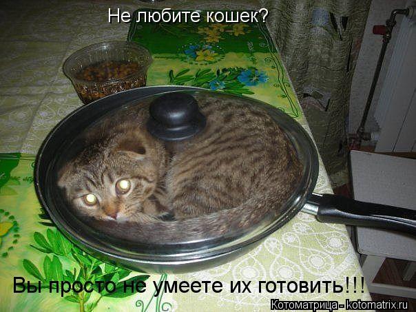 Котоматрица: Не любите кошек? Вы просто не умеете их готовить!!!