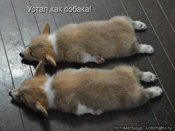 Котоматрица: Устал как собака!