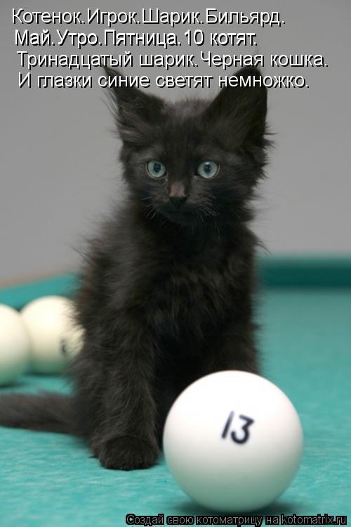 Котоматрица: Котенок.Игрок.Шарик.Бильярд. Май.Утро.Пятница.10 котят. Май.Утро.Пятница.10 котят. Тринадцатый шарик.Черная кошка. И глазки синие светят немно