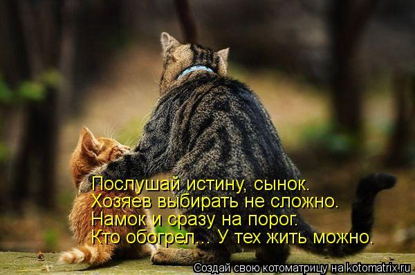 Котоматрица: Послушай истину, сынок. Хозяев выбирать не сложно.  Намок и сразу на порог. Кто обогрел... У тех жить можно.