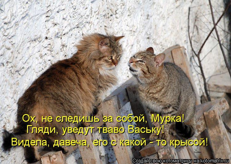 Котоматрица: Ох, не следишь за собой, Мурка! Гляди, уведут тваво Ваську! Видела, давеча, его с какой - то крысой!