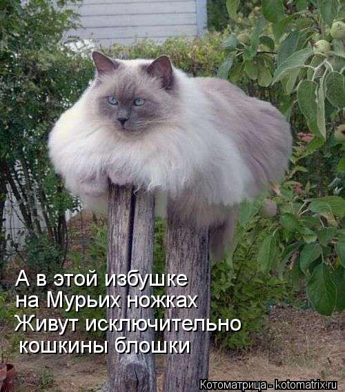 Котоматрица: А в этой избушке на Мурьих ножках Живут исключительно кошкины блошки