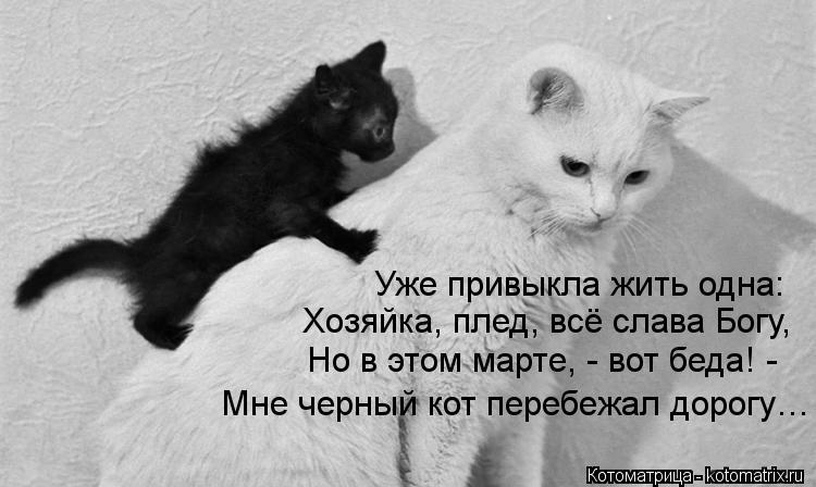 Котоматрица: Уже привыкла жить одна: Хозяйка, плед, всё слава Богу, Но в этом марте, - вот беда! - Мне черный кот перебежал дорогу…
