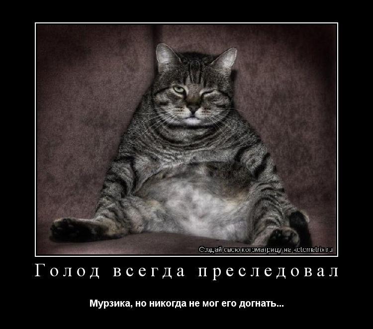 Котоматрица: Голод всегда преследовал Мурзика, но никогда не мог его догнать...
