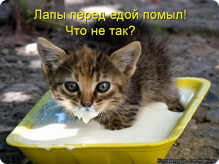 Котоматрица: Лапы перед едой помыл! Что не так?