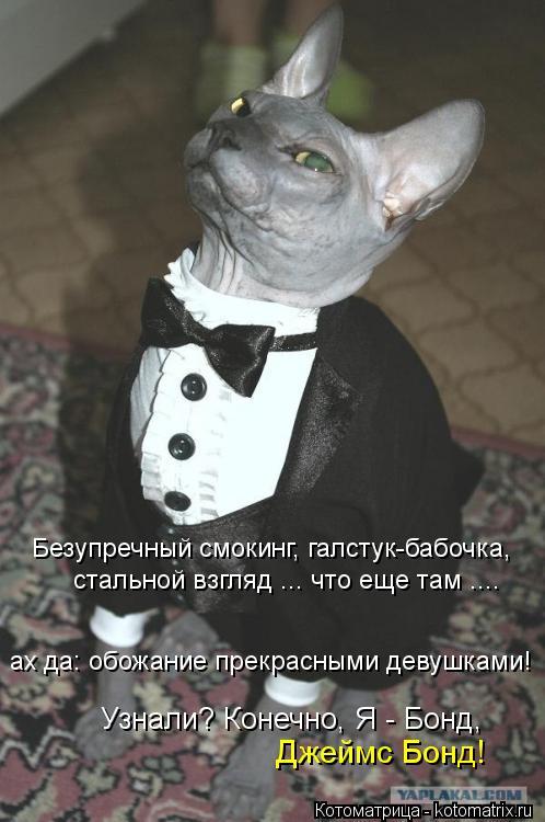 Котоматрица: Безупречный смокинг, галстук-бабочка,  стальной взгляд ... что еще там .... ах да: обожание прекрасными девушками! Узнали? Конечно, Я - Бонд, Джей