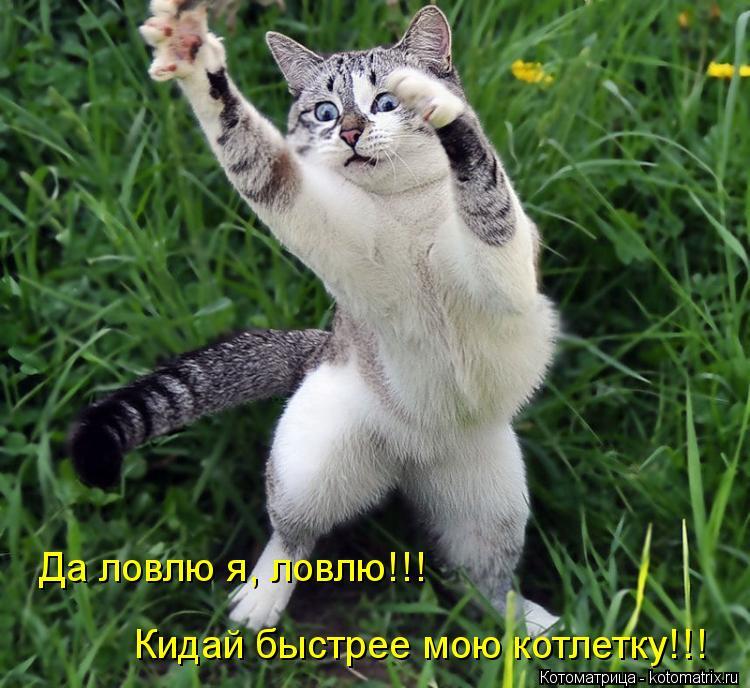 лови меня фото на русском