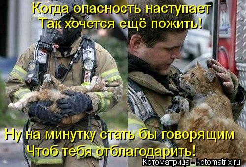 Котоматрица: Когда опасность наступает Так хочется ещё пожить! Ну на минутку стать бы говорящим Чтоб тебя отблагодарить!