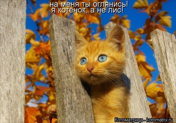Котоматрица: на меня ты оглянись! я котёнок, а не лис!