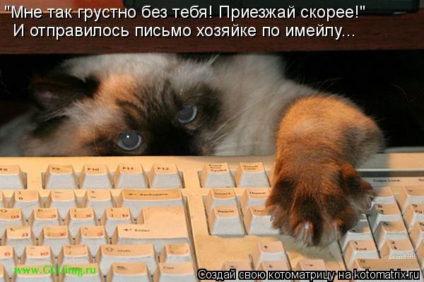 """Котоматрица: """"Мне так грустно без тебя! Приезжай скорее!"""" И отправилось письмо хозяйке по имейлу..."""