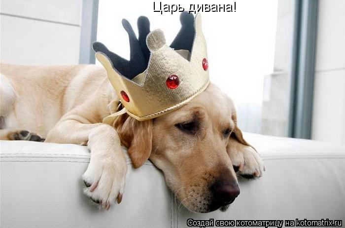 Котоматрица: Царь дивана!