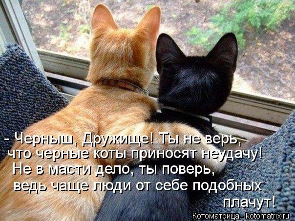 Котоматрица: - Черныш, Дружище! Ты не верь,  что черные коты приносят неудачу!  Не в масти дело, ты поверь,  ведь чаще люди от себе подобных   плачут!