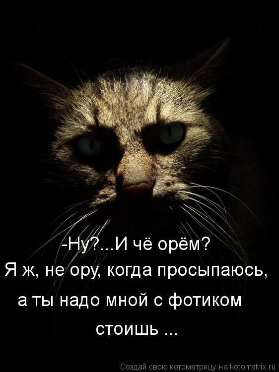 Котоматрица: Я ж, не ору, когда просыпаюсь, а ты надо мной с фотиком стоишь ... -Ну?...И чё орём?