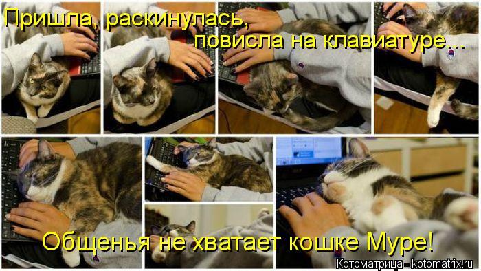 Котоматрица: Пришла, раскинулась,  повисла на клавиатуре...  Общенья не хватает кошке Муре!