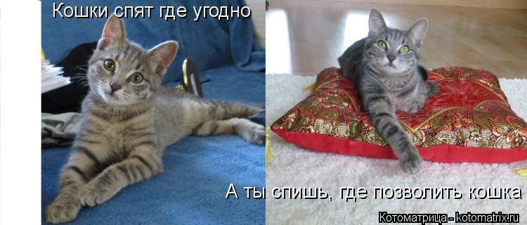 Котоматрица: Кошки спят где угодно А ты спишь, где позволить кошка