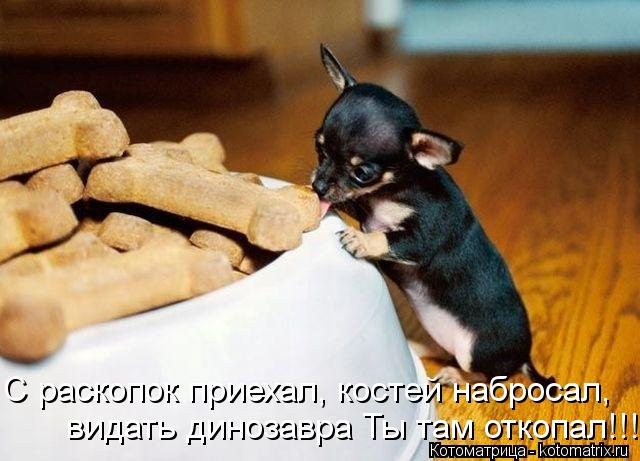 http://kotomatrix.ru/images/lolz/2012/10/12/kotomatritsa_M.jpg