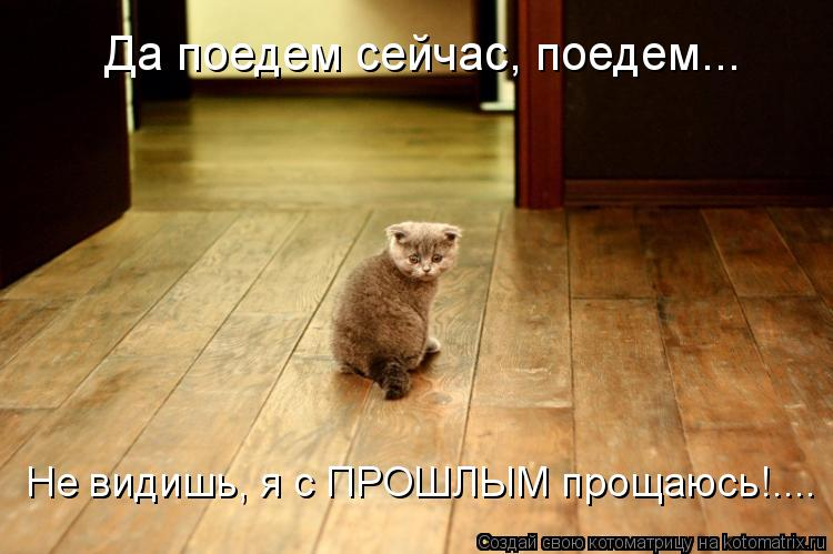 Котоматрица: Да поедем сейчас, поедем... Не видишь, я с ПРОШЛЫМ прощаюсь!....