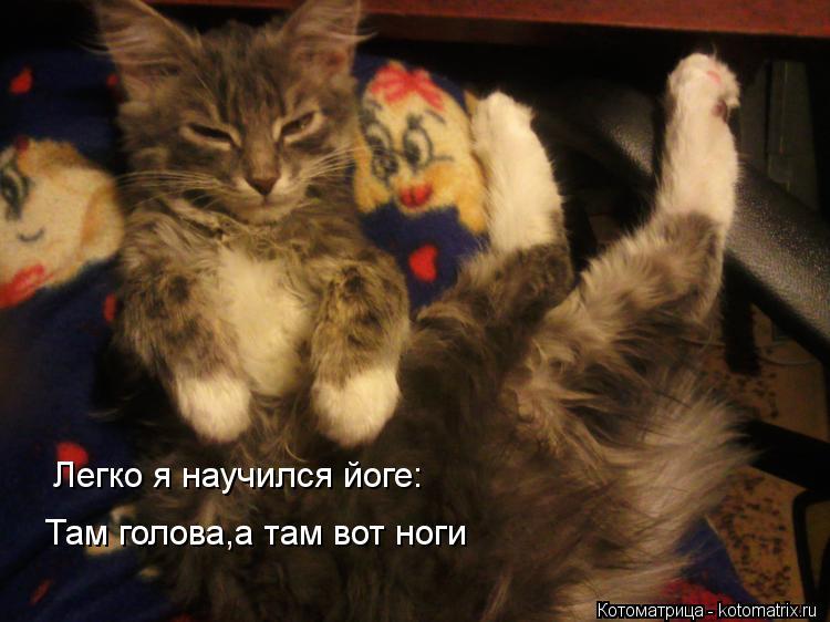 Котоматрица: Легко я научился йоге: Там голова,а там вот ноги