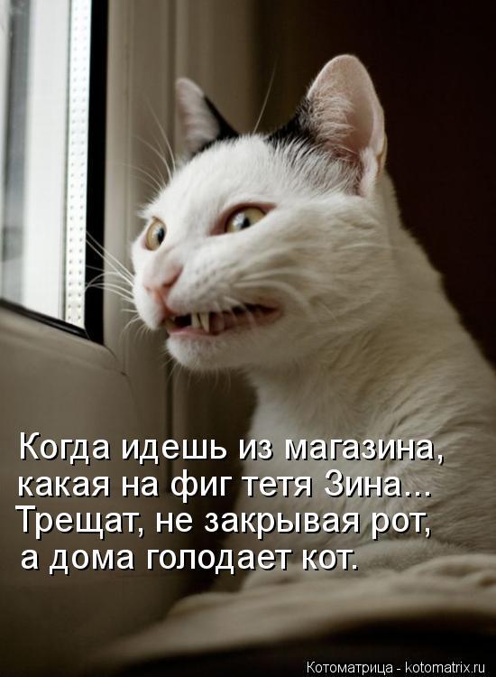 Котоматрица: Когда идешь из магазина, какая на фиг тетя Зина... Трещат, не закрывая рот, а дома голодает кот.