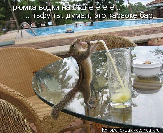 Котоматрица: - рюмка водки на столе-е-е-е... ... тьфу ты. думал, это караоке-бар.