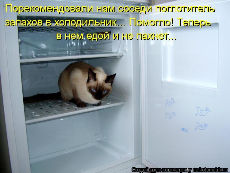 Котоматрица: Порекомендовали нам соседи поглотитель запахов в холодильник... Помогло! Теперь в нем едой и не пахнет...