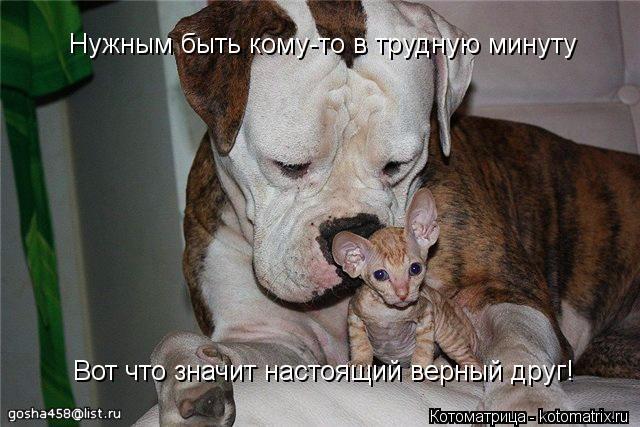 Котоматрица: Нужным быть кому-то в трудную минуту Вот что значит настоящий верный друг!