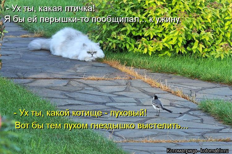 Котоматрица: - Ух ты, какая птичка!  Я бы ей перышки-то пообщипал... к ужину. - Ух ты, какой котище - пуховый!  Вот бы тем пухом гнездышко выстелить...