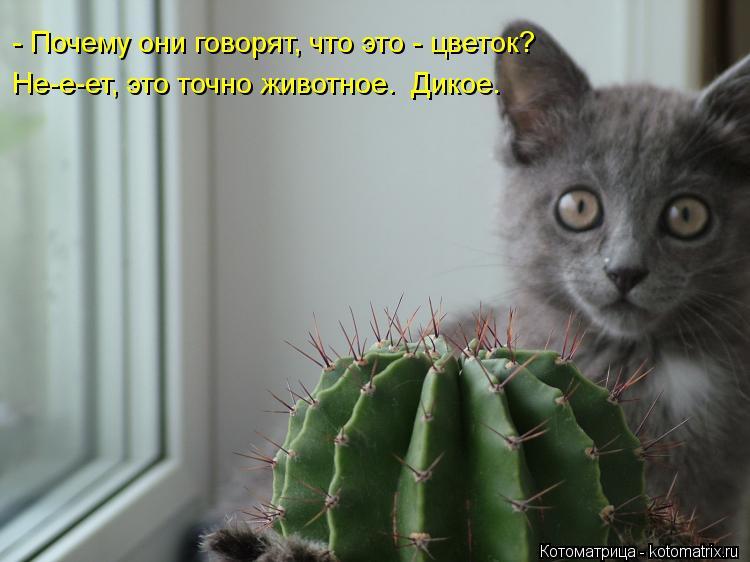 Котоматрица: - Почему они говорят, что это - цветок? Не-е-ет, это точно животное.  Дикое.