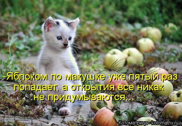 Котоматрица: -Яблоком по макушке уже пятый раз попадает, а открытия все никак не придумываются...