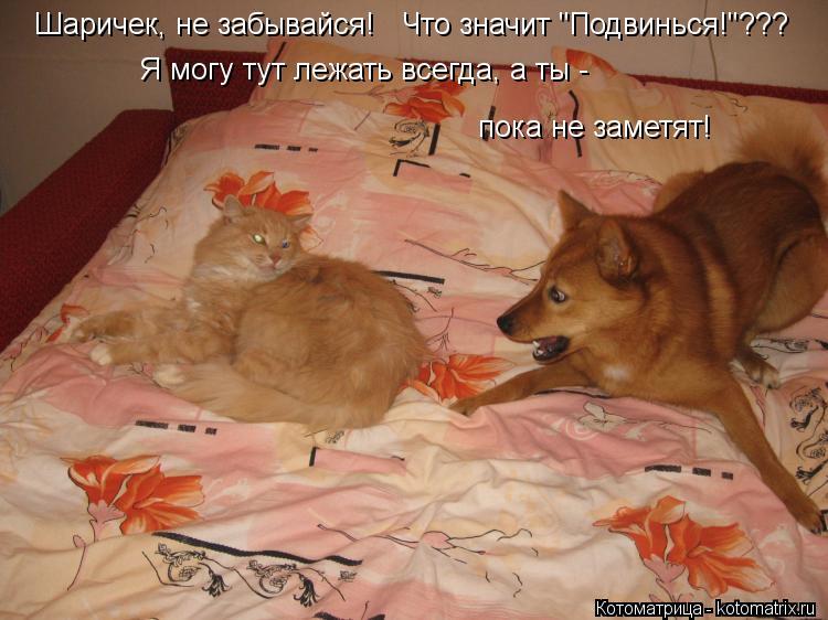 """Котоматрица: Шаричек, не забывайся! Я могу тут лежать всегда, а ты -  пока не заметят! Что значит """"Подвинься!""""???"""