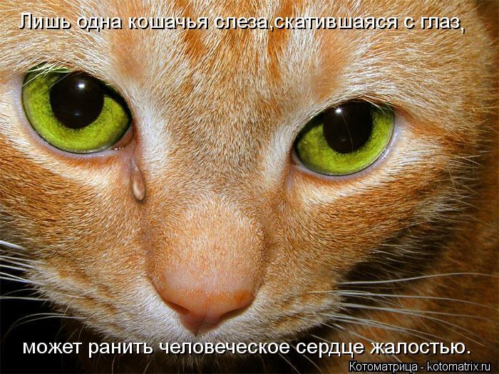 Котоматрица: Лишь одна кошачья слеза,скатившаяся с глаз , может ранить человеческое сердце жалостью.