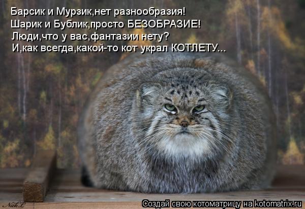 Котоматрица: Барсик и Мурзик,нет разнообразия! Шарик и Бублик,просто БЕЗОБРАЗИЕ! Люди,что у вас,фантазии нету? И,как всегда,какой-то кот украл КОТЛЕТУ...