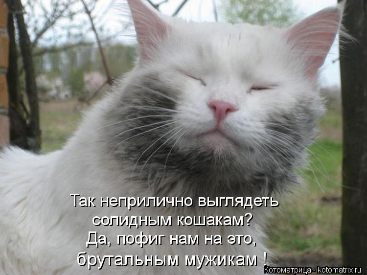 Котоматрица: Так неприлично выглядеть  солидным кошакам? Да, пофиг нам на это, брутальным мужикам !