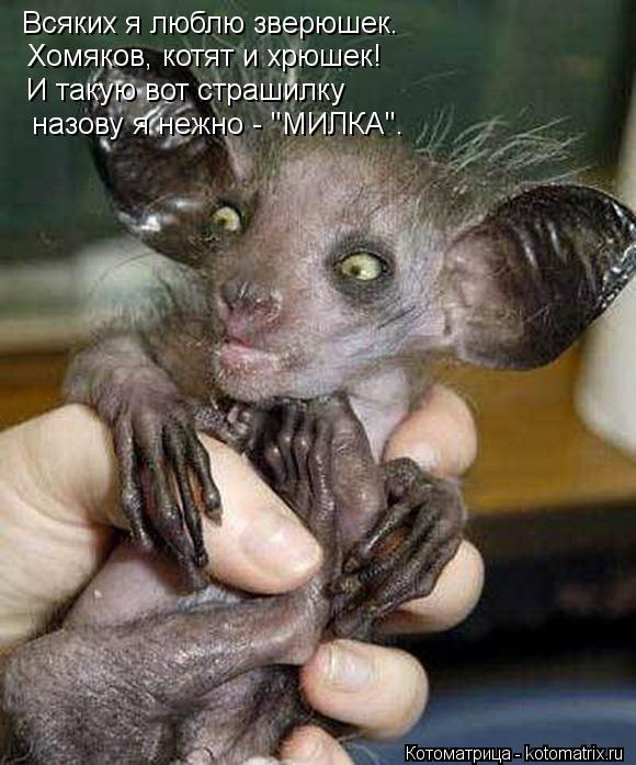 """Котоматрица: Всяких я люблю зверюшек.  Хомяков, котят и хрюшек!  И такую вот страшилку  назову я нежно - """"МИЛКА""""."""
