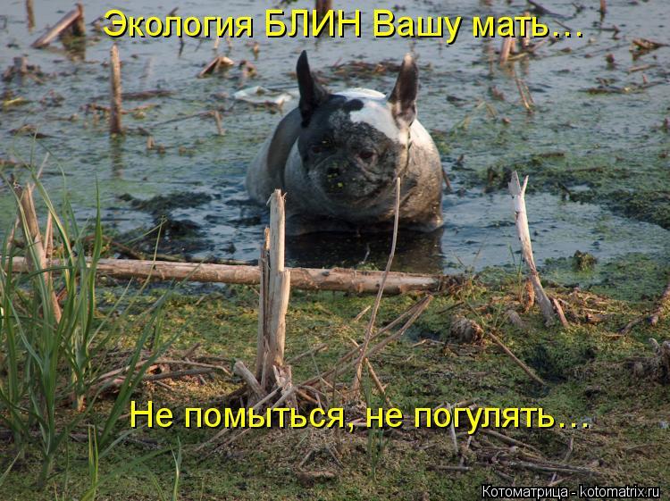 Котоматрица: Экология БЛИН Вашу мать… Не помыться, не погулять…