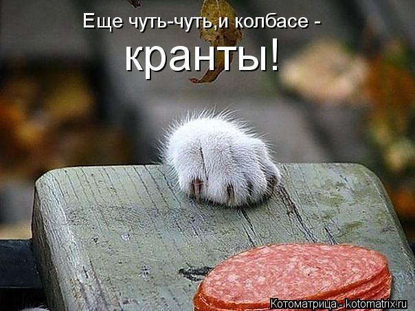 Котоматрица: Еще чуть-чуть,и колбасе -  кранты!