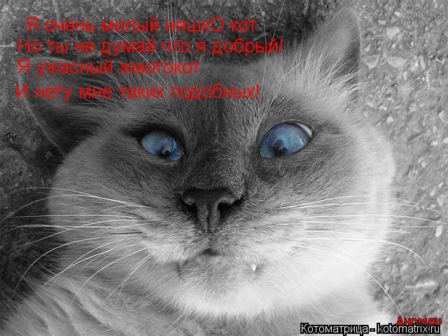 Котоматрица: Я очень милый няшкО кот. Но ты не думай что я добрый! Я ужасный жмотокот И нету мне таких подобных!