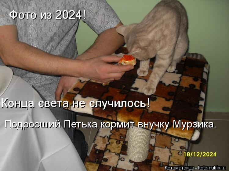 Котоматрица: Фото из 2024! Конца света не случилось! Подросший Петька кормит внучку Мурзика.