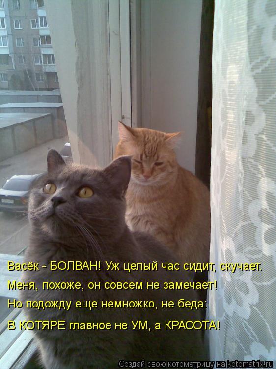 Котоматрица: Васёк - БОЛВАН! Уж целый час сидит, скучает. Меня, похоже, он совсем не замечает! Но подожду еще немножко, не беда: В КОТЯРЕ главное не УМ, а КРА