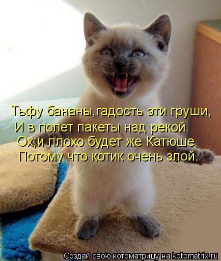 Котоматрица: Тьфу бананы,гадость эти груши, И в полет пакеты над рекой. Ох,и плохо будет же Катюше, Потому что котик очень злой.