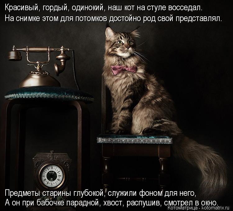 Котоматрица: Красивый, гордый, одинокий, наш кот на стуле восседал.  На снимке этом для потомков достойно род свой представлял. Предметы старины глубокой
