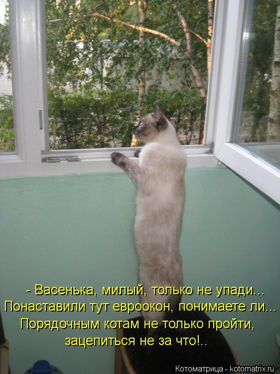 Котоматрица: - Васенька, милый, только не упади... Понаставили тут евроокон, понимаете ли... Порядочным котам не только пройти,  зацепиться не за что!..