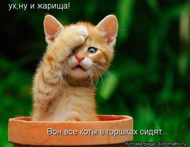 Котоматрица: ух,ну и жарища! Вон,все коты в горшках сидят...